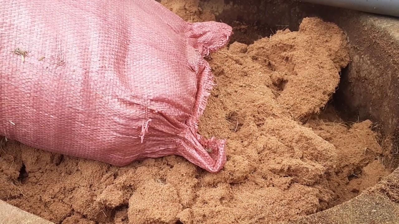 Quy trình xử lý xơ dừa làm giá thể ươm cây, chiết cây
